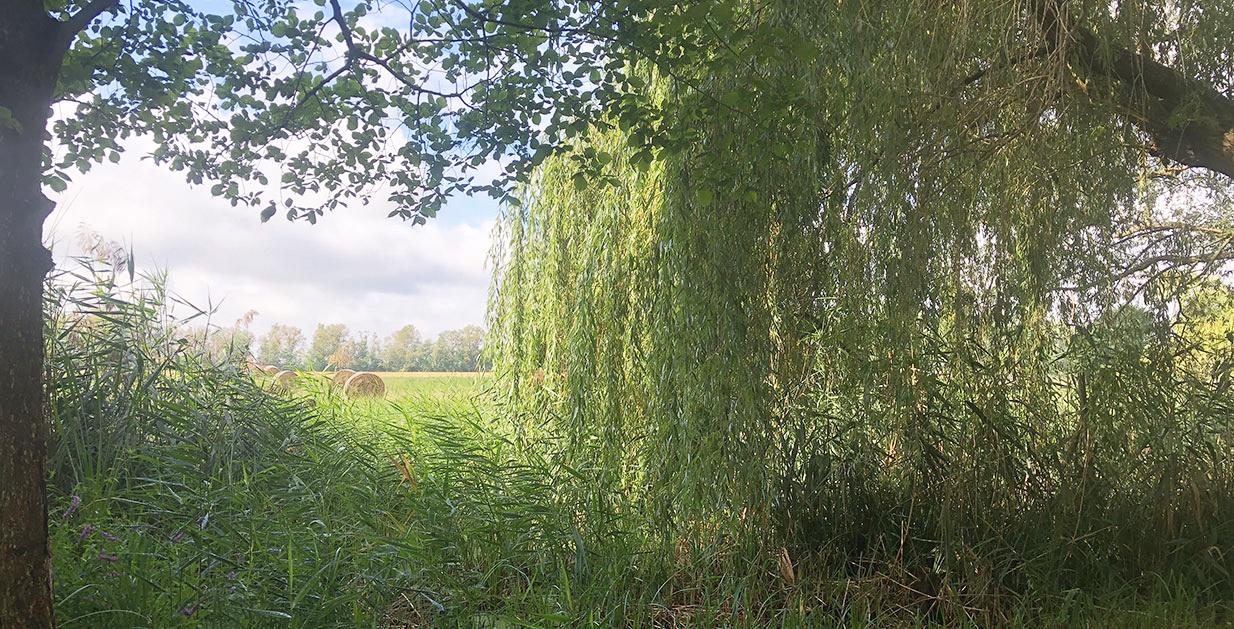 Naturpark Nuthe-Nieplitz I
